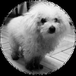 Pies Rasowy #08.2019